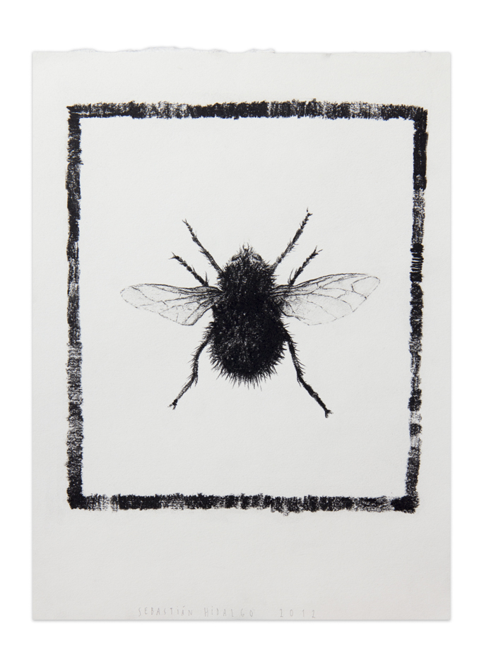 Mosca enmarcada ,   2012, Charcoal on paper, 30,5 x 22,9 cm