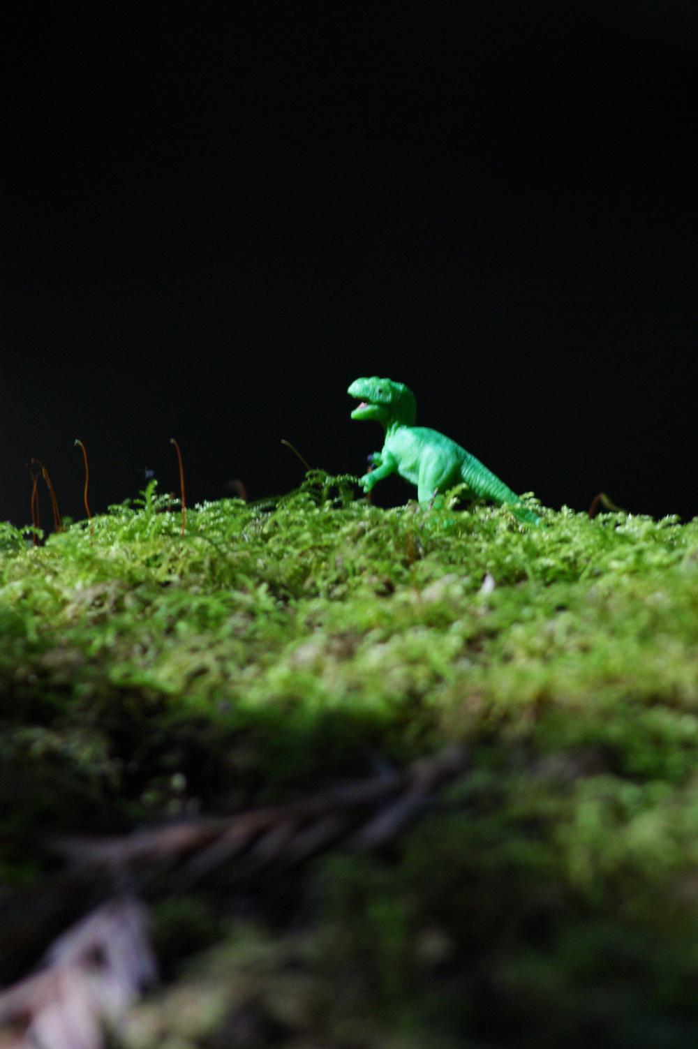 Tyrannosaurus Rex, 2013, Photography