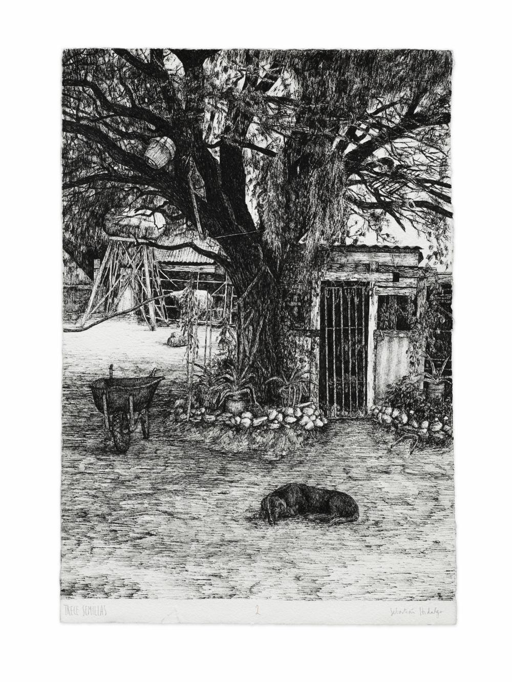 Trece semillas/2, 2015 Ink on paper, 39 x 26.5 cm