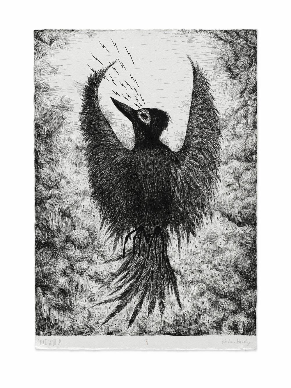 Trece semillas/3, 2015 Ink on paper, 39 x 26.5 cm