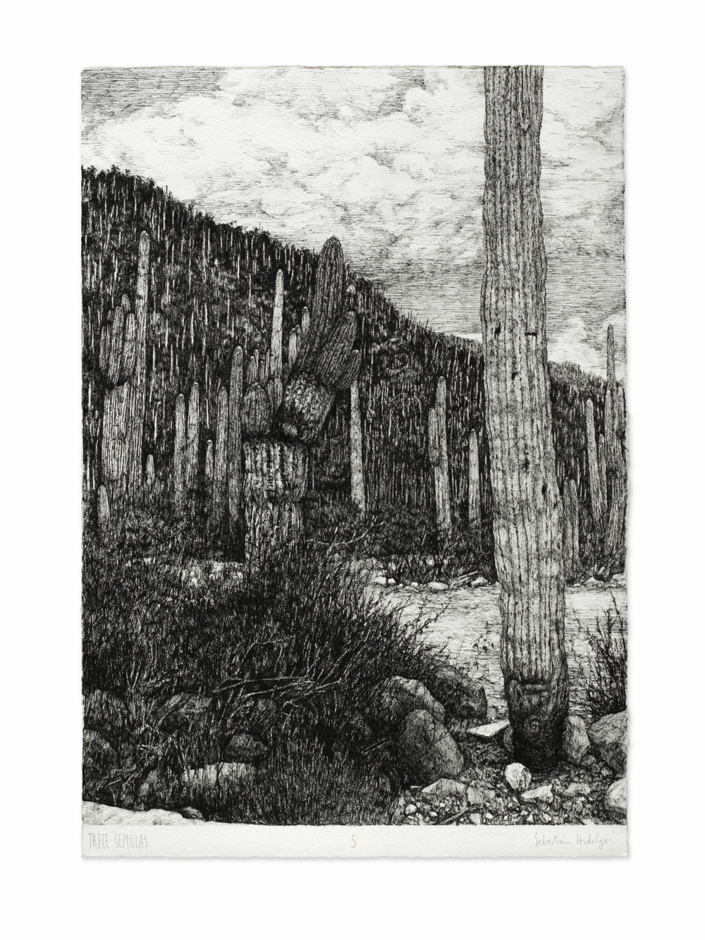 Trece semillas/5, 2015 Ink on paper, 39 x 26.5 cm