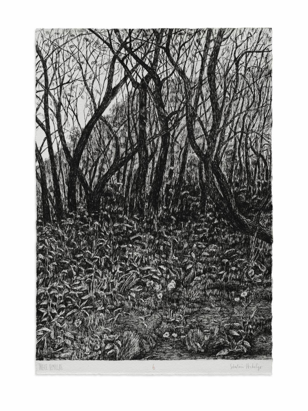 Trece semillas/6, 2015 Ink on paper, 39 x 26.5 cm