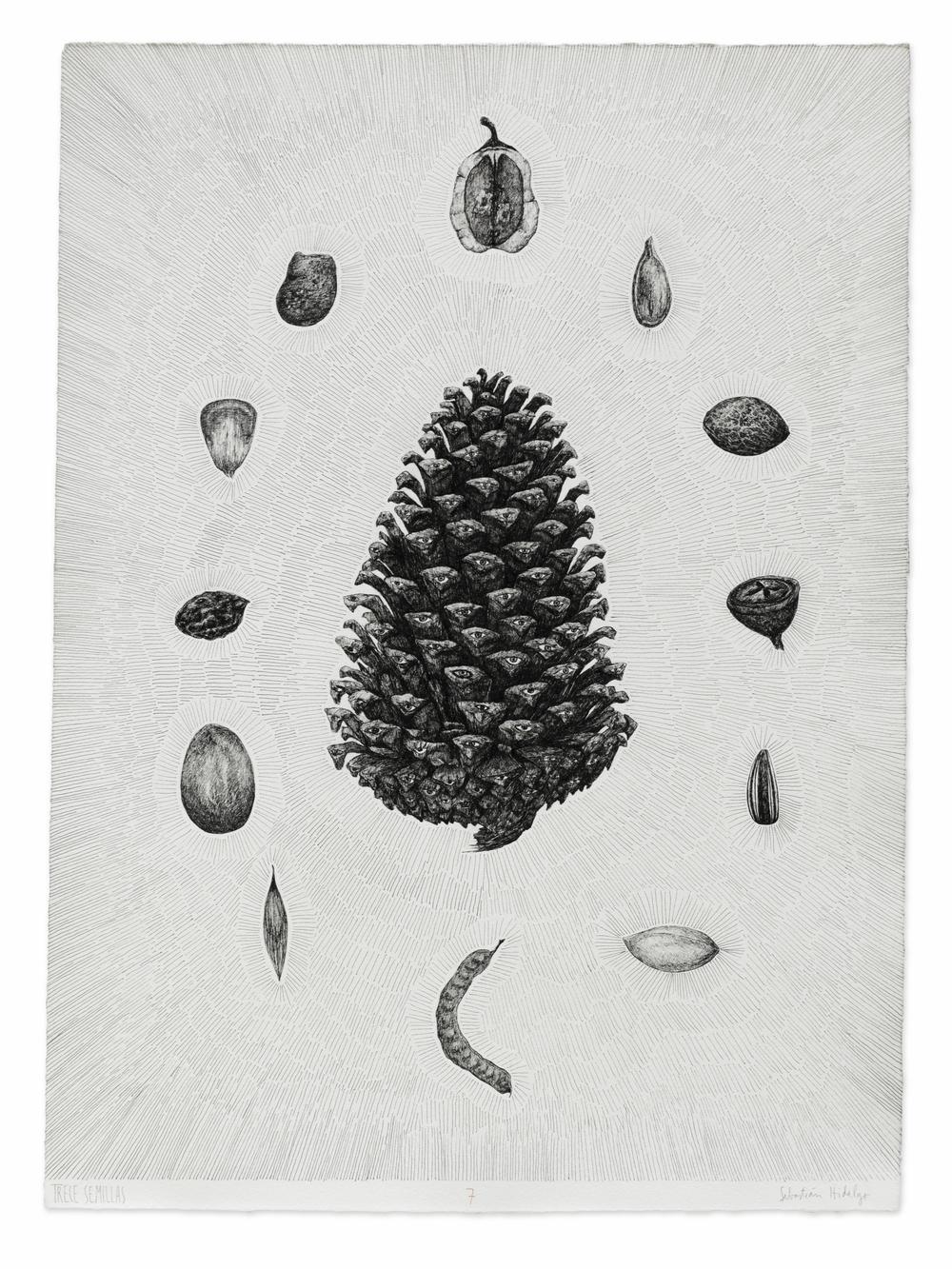 Trece semillas/7, 2015, Ink on paper, 53 x 39 cm