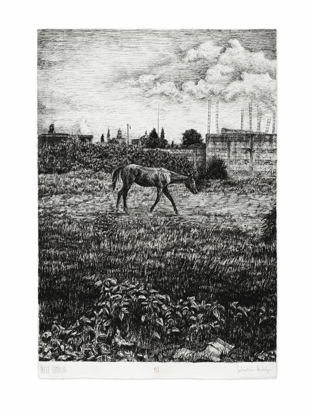 Trece semillas/10, 2015 Ink on paper, 39 x 26.5 cm
