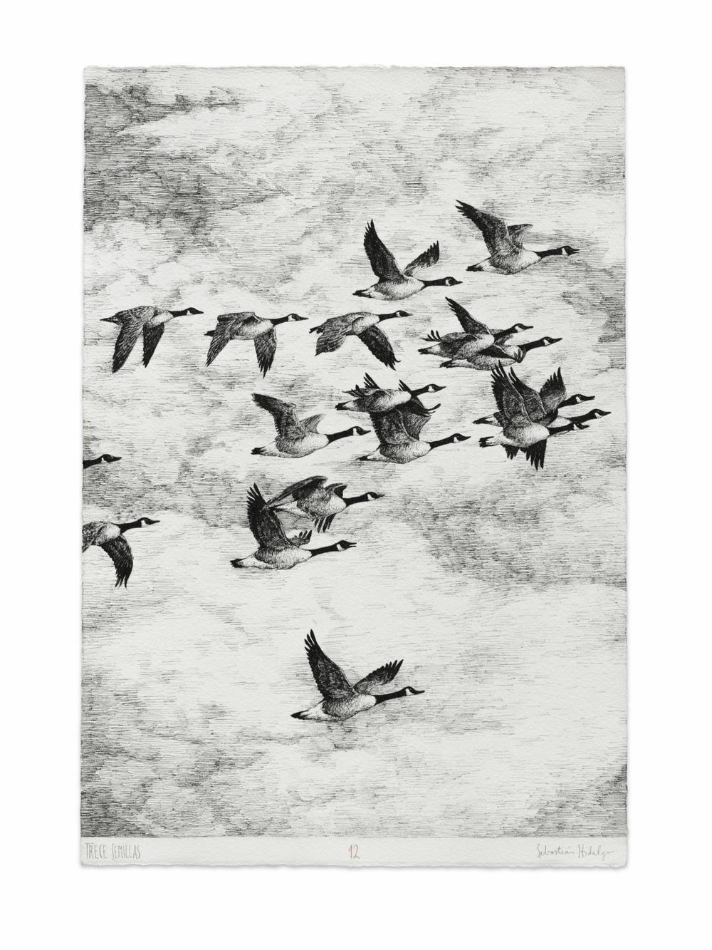 Trece semillas/12, 2015 Ink on paper, 39 x 26.5 cm