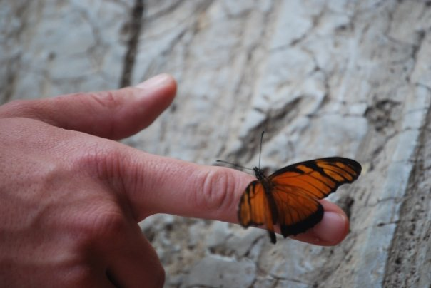 """Set Free"" - Butterfly Release in Monteverde, Costa Rica, 2009"