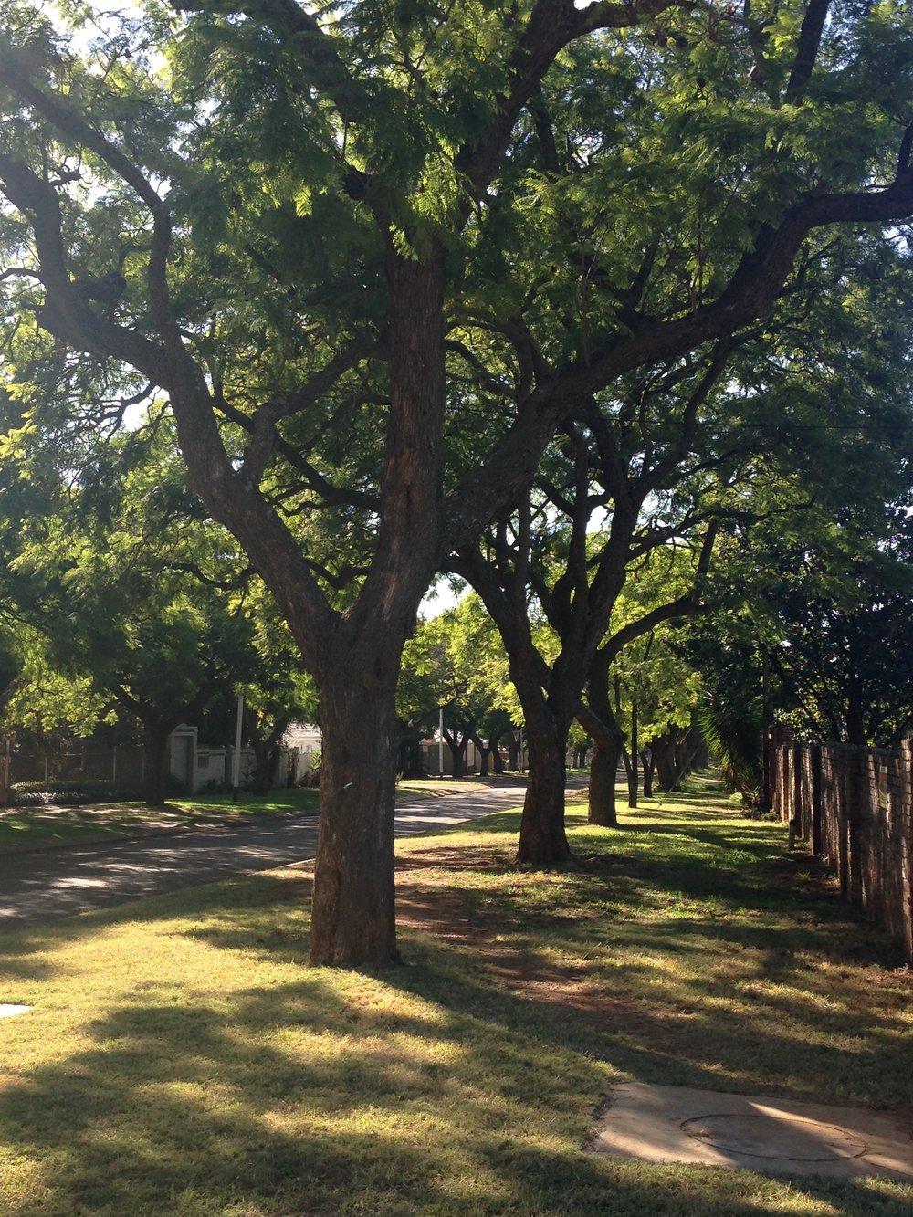 Verdant - Pretoria, South Africa