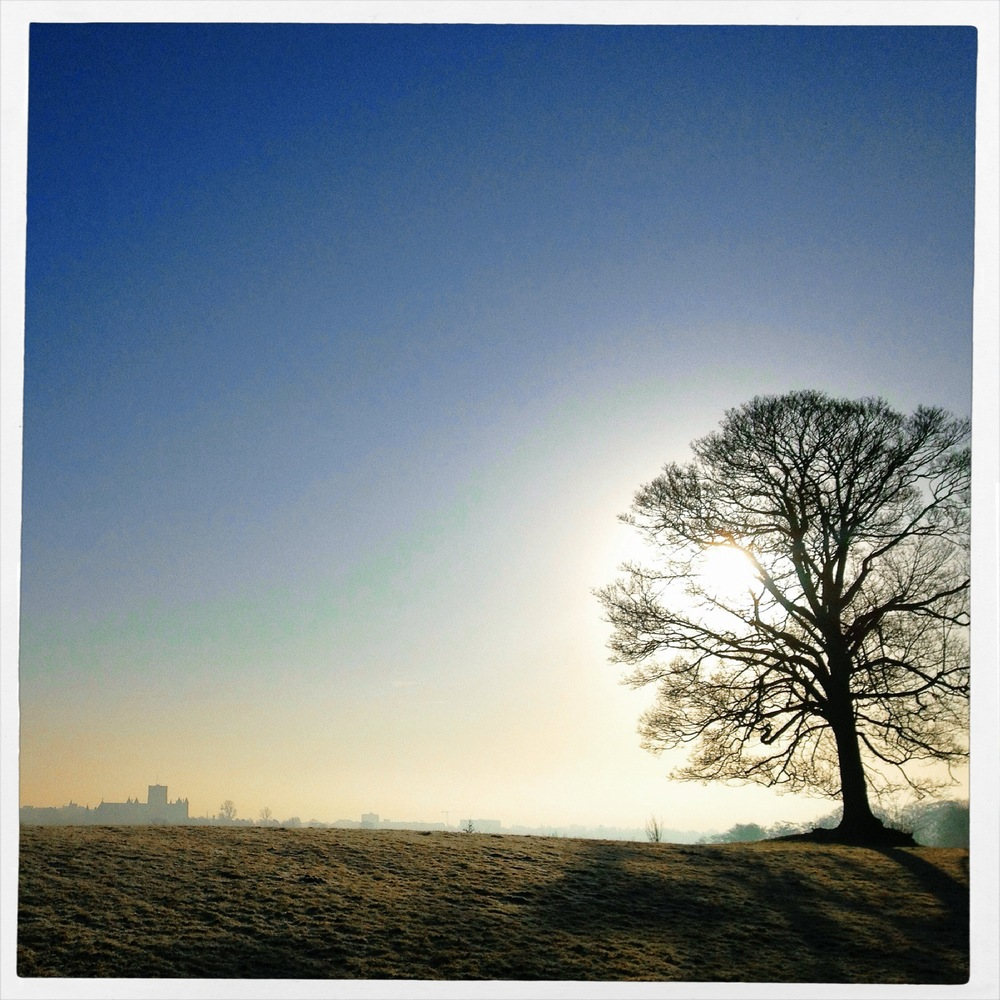 Morning in the Verulamium Park, St. Albans
