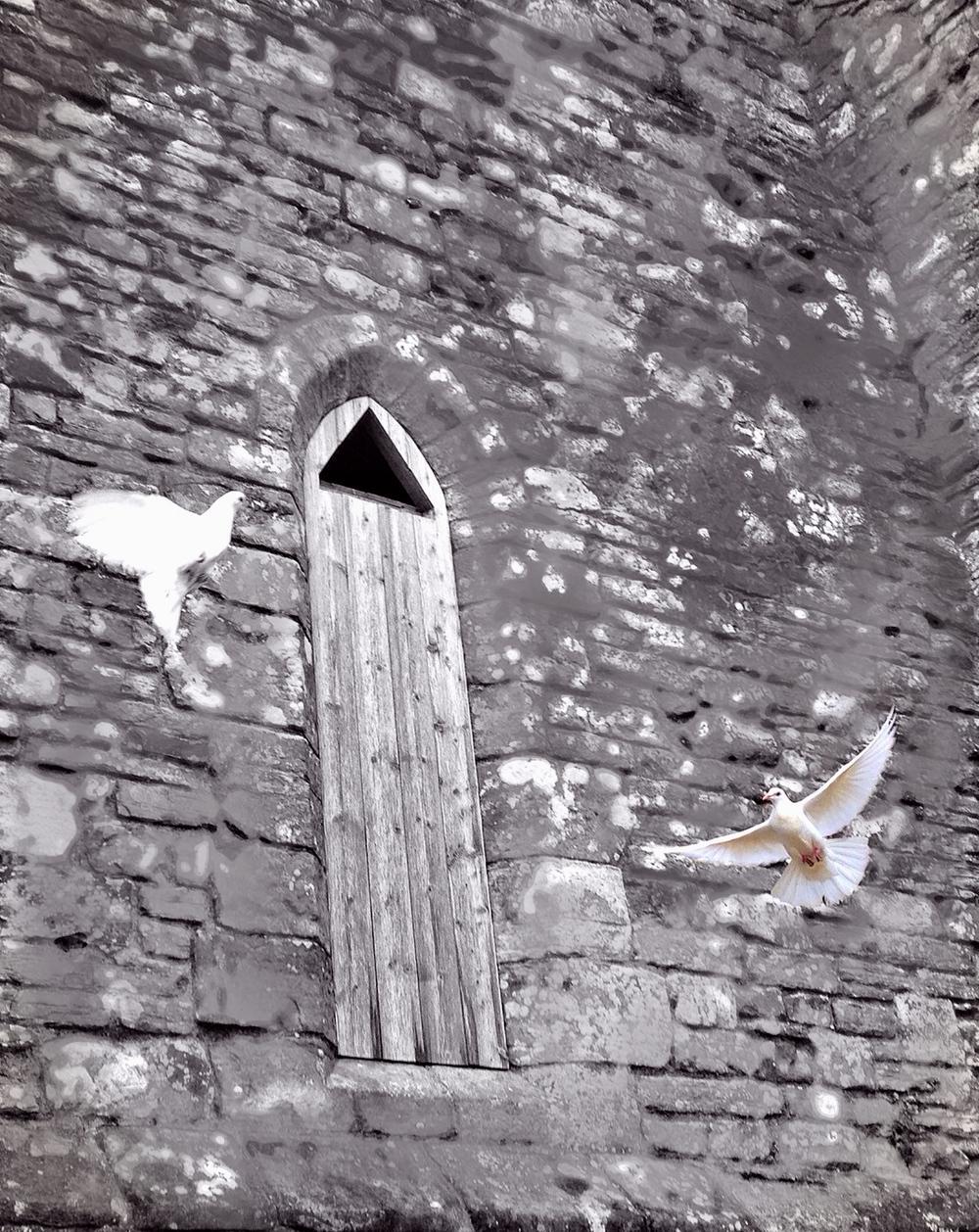 Descendants of the battle's surviving doves