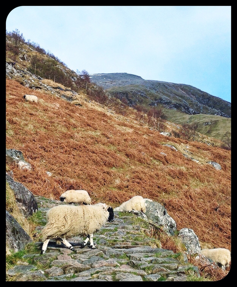 Rush hour on the Ben Nevis trail