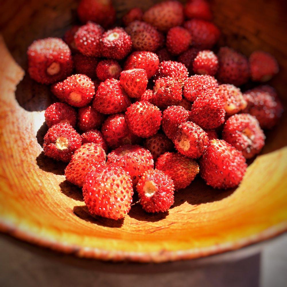 Pixie berries