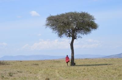 Maasai under Acacia tree