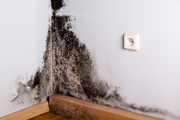 Mould growing on walls of home