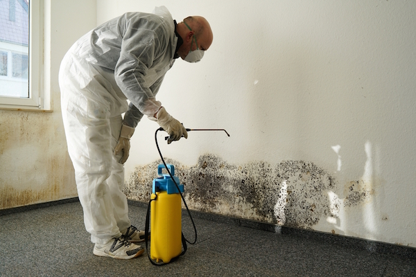 Contractor works on mould removal treatment
