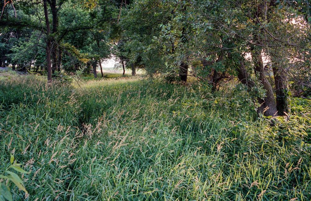 Prairie Woods. Nebraska.