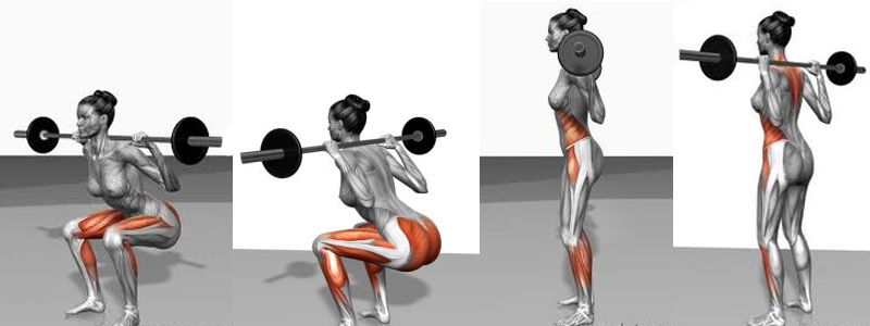 Muscles worked in a Squat. Image: Becuo.com