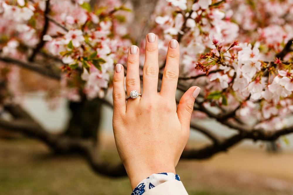 Washington-DC-Cherry-Blossom-Surprise-Proposal