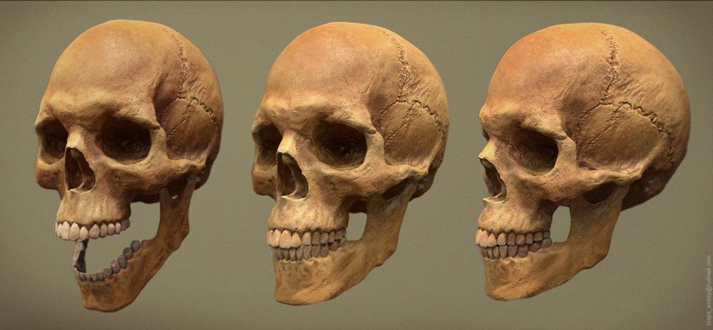 Skull_render.jpg