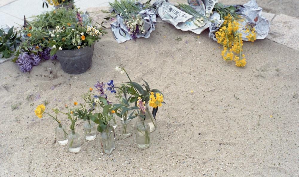 瀬戸内の野花も会場に。