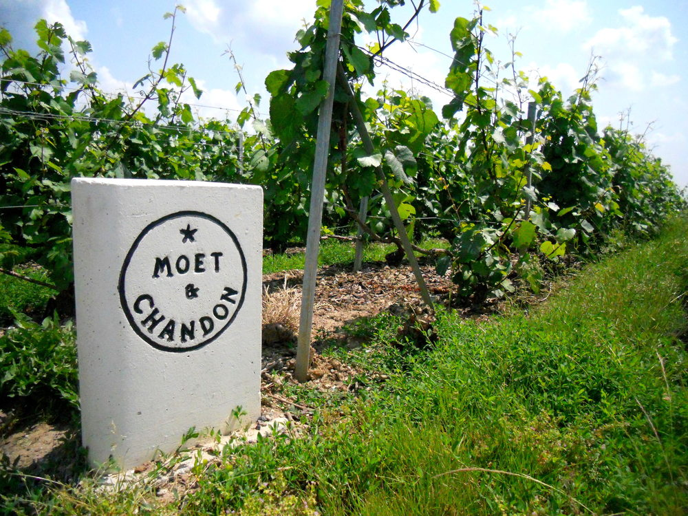 Moët et Chandon, One of the Leading Champagne Producers in the World  - image: zastavki.com
