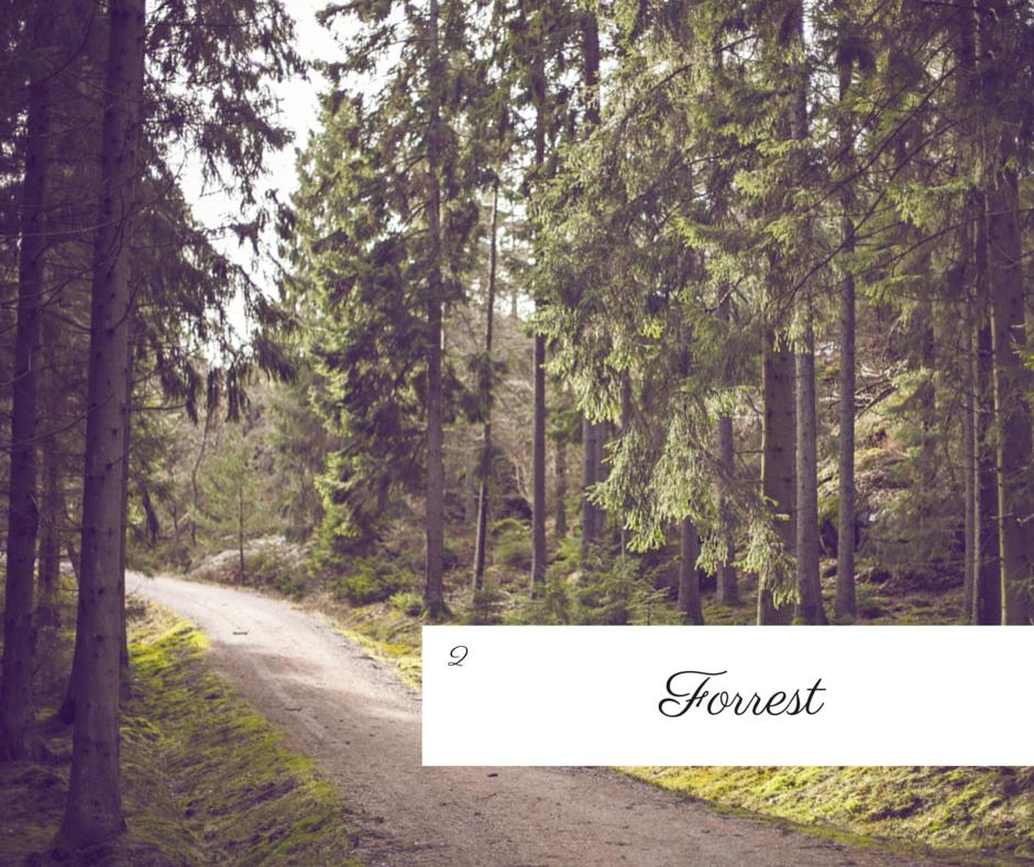 FF_Forrest.png