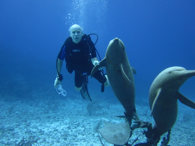 Diving with the Dolphins.jpeg