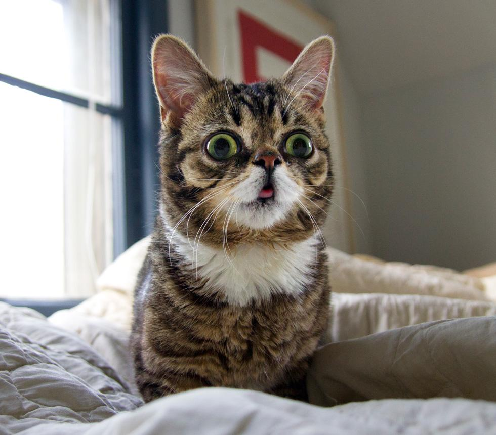 Lil Bub.jpg
