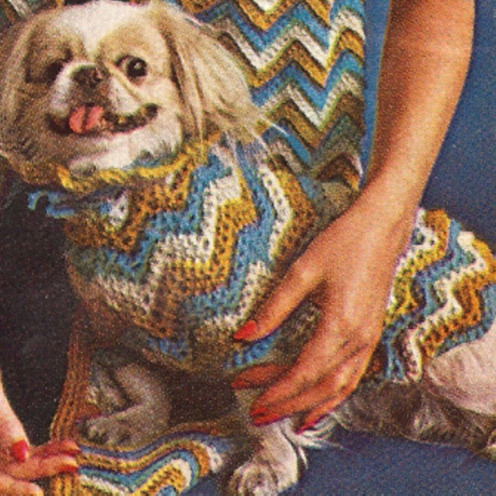 crochet dog sweater.jpeg