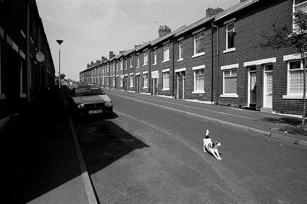 dog in street.jpg