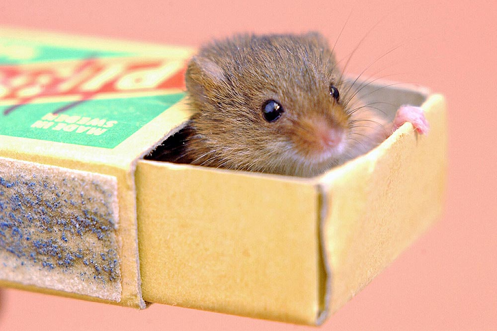 mice 2.jpg