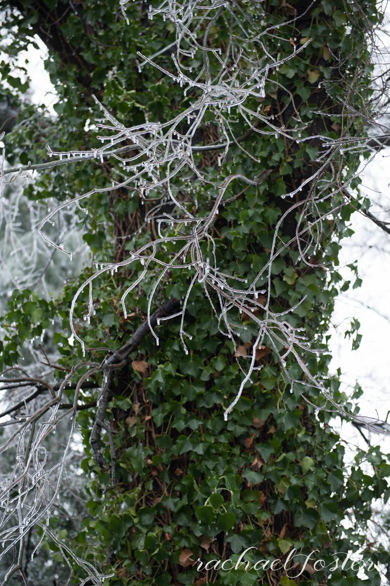 Ice Storm Photos (4 of 32).jpg
