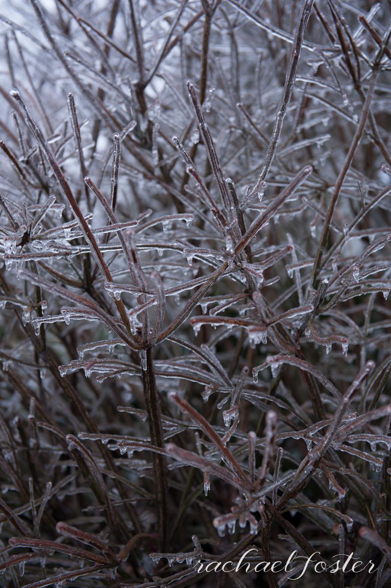 Ice Storm Photos (6 of 32).jpg