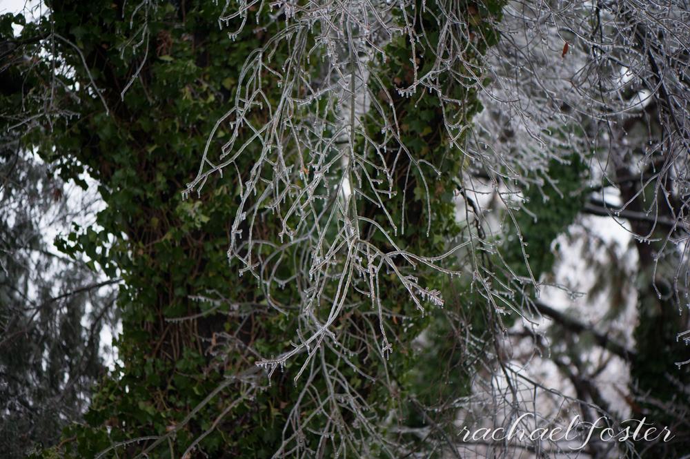 Ice Storm Photos (7 of 32).jpg