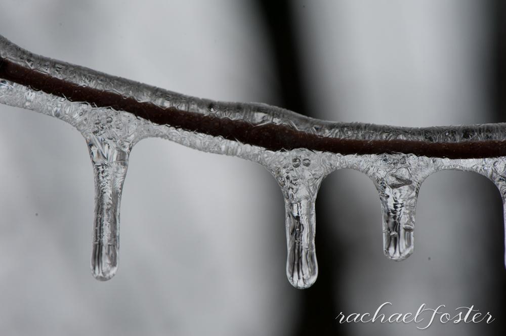 Ice Storm Photos (16 of 32).jpg