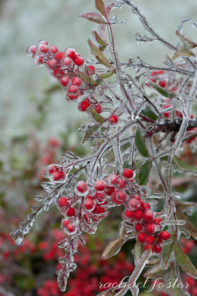 Ice Storm Photos (31 of 32).jpg