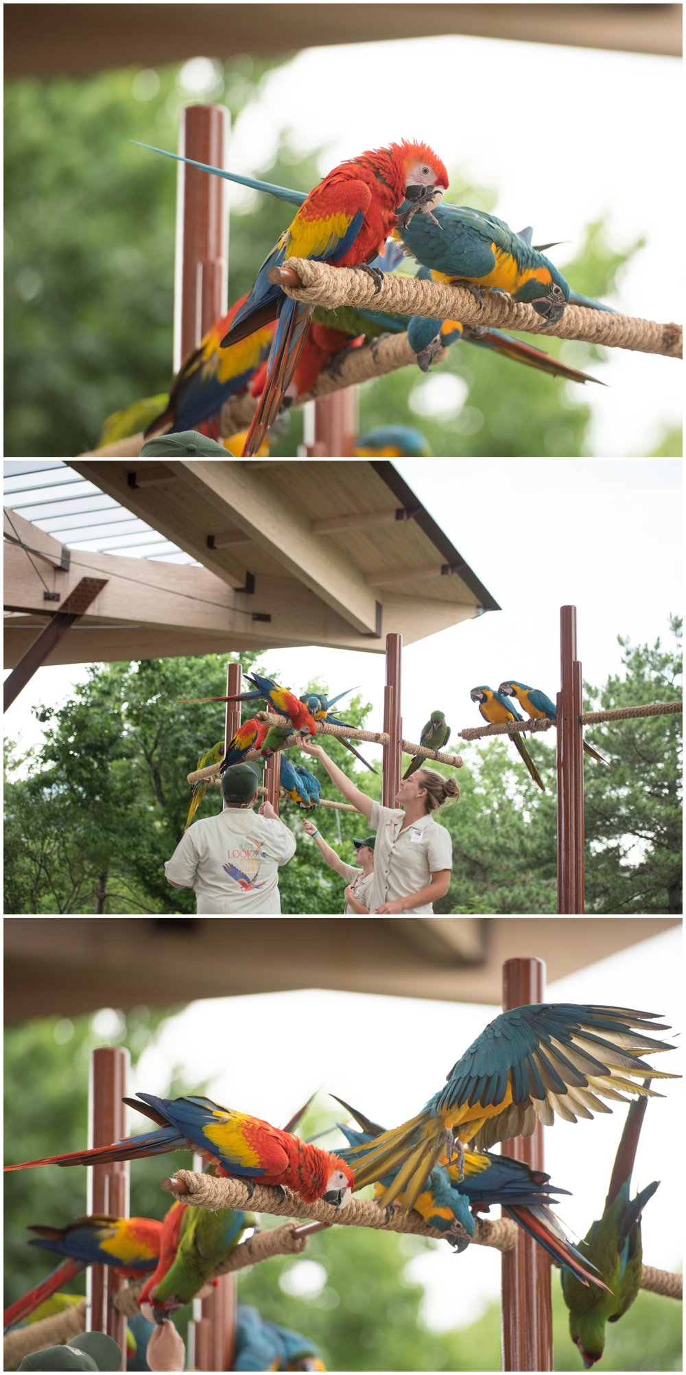 Indianpolis Zoo Bicentennial Pavilion Event by Rachael Foster Photography_0053.jpg