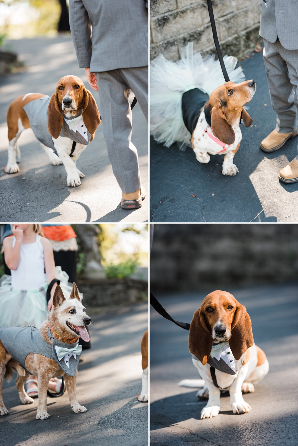 Rustic Barn Wedding with Sweet Rescue Dogs in Central Indiana_0009.jpg