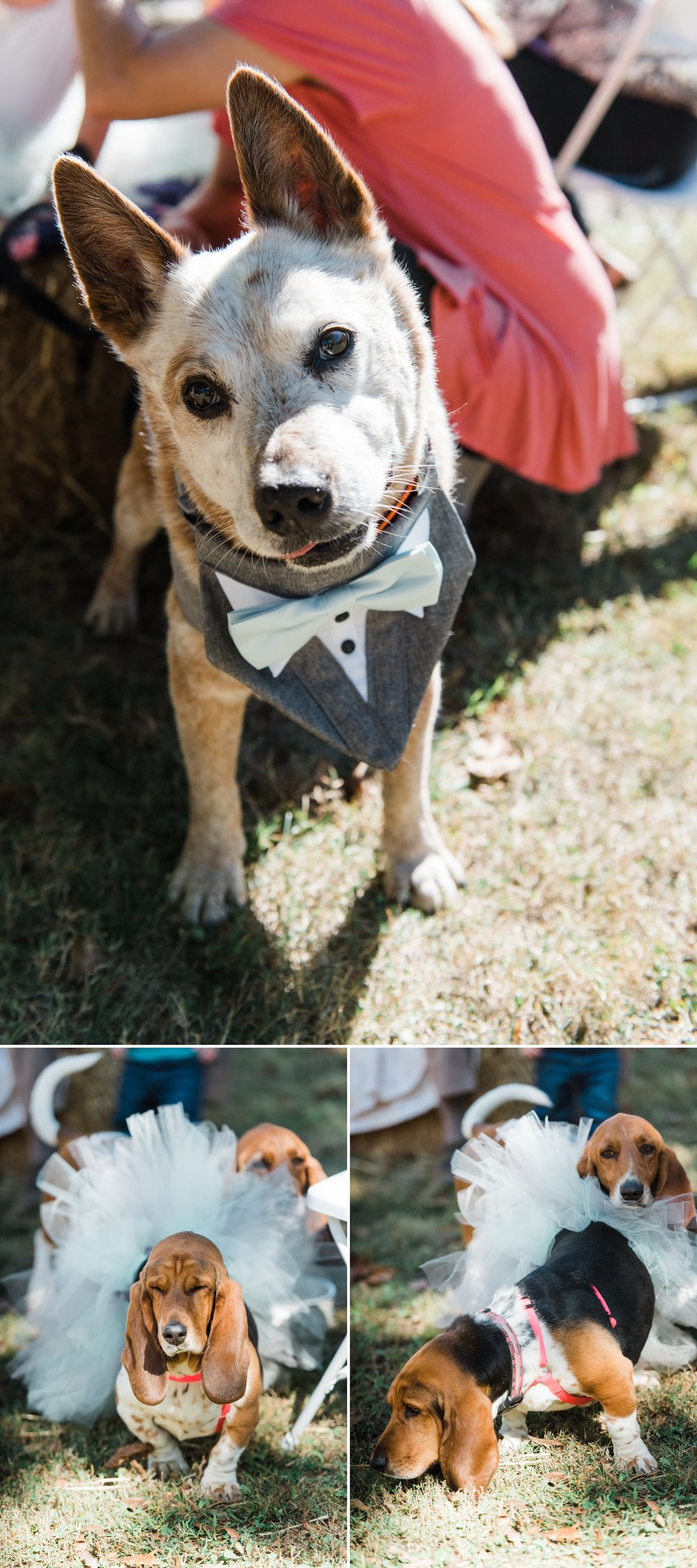 Rustic Barn Wedding with Sweet Rescue Dogs in Central Indiana_0017.jpg