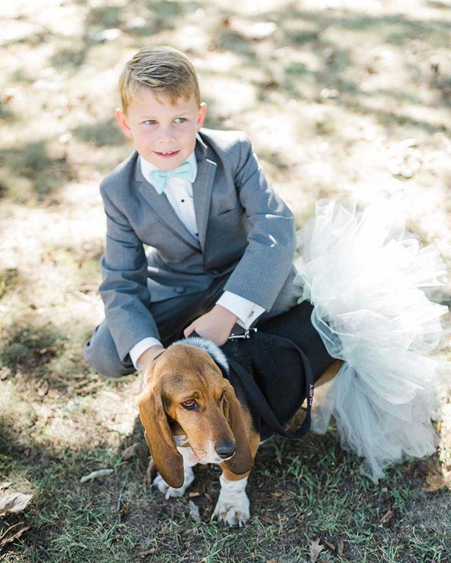 Just the sweetest ringbearer with his basset hound flower girl. ⠀ *⠀ *⠀ *⠀ *⠀ #rachaelfosterphoto #igersindy #igersindiana #igersmidwest #indywedding #midwestwedding #weddingphotography #weddingphotographer #weddingphotos #naptownwedding #circlecitywedding #artofvisuals #chasinglight #brbchasinglight  #bridetobe2018  #soloverly #thedailywedding #👰 #👰📷 #👰📸 #💍#weddingparty #ringbearer #bassethound #flowergirl