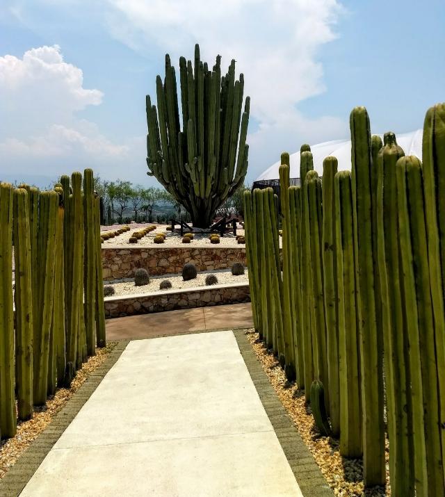 Entrada al Jardín de las Cactáceas en Jardines de México