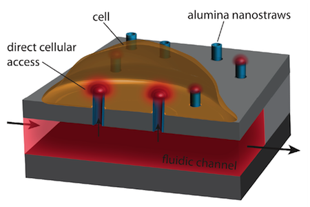 nanostraw cell penetration schematic_rescaled.png