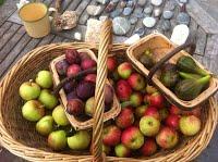 harvest1lowres.jpg