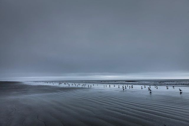 #gitzoinspires #oceanfront  #landscape  #photography that I shot of a #beach on #Hiltonhead #island #southcarolina with a #canon 1DS Mark iii and a 16-35mm f/2.8Lii . . . . . . . . . . . . . #teamcanon #canonphotography  #atlantic #ocean #atlanticocean #cloudy #sky #sand #hiltonheadisland #wildlifephotography #carolina #gray #gloomy #darkclouds #clouds #blackandwhitephoto  #framedongitzo #seagulls #footprints #landscapephotography #texasphotographer