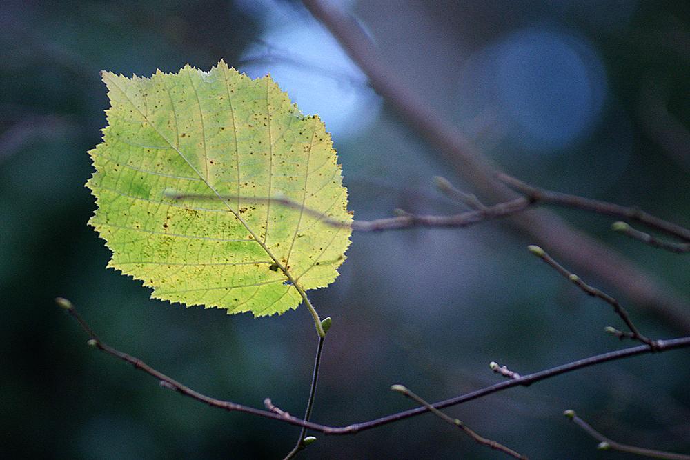 leafDSC00737.jpg