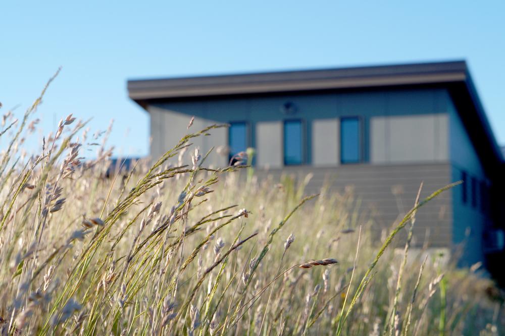 grass b8.jpg
