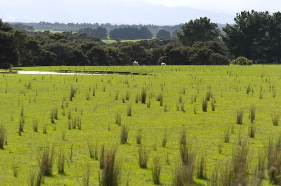 Farmland around Martinborough (Nikon D2H + 40mm f2 ULTRON)
