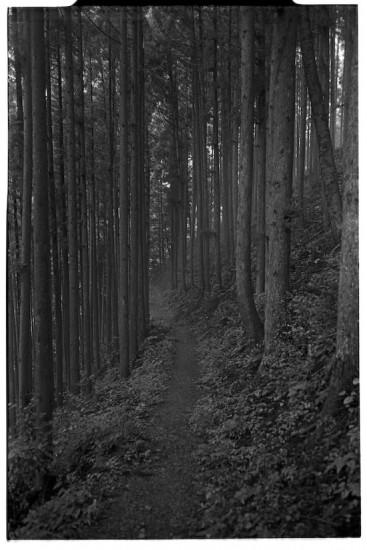 Trials in Okutama on the hillside (Leica M2 + Summicron 35mm ASPH)