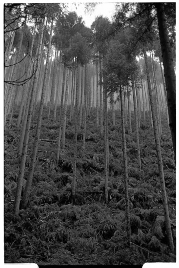 Okutama Forest  (Leica M2 + Summicron 35mm ASPH)