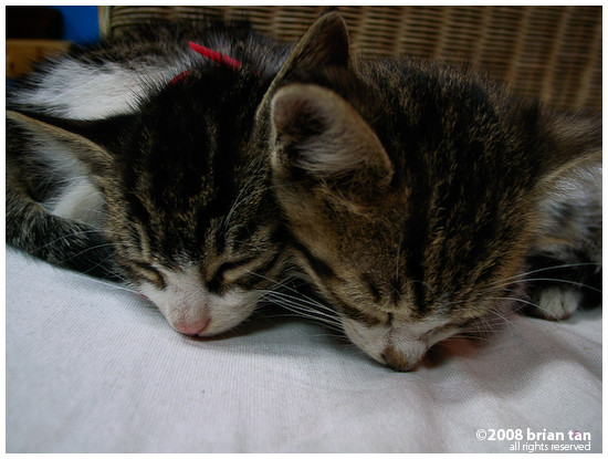 These two kittens at Sim's loves to cozy up to the guests