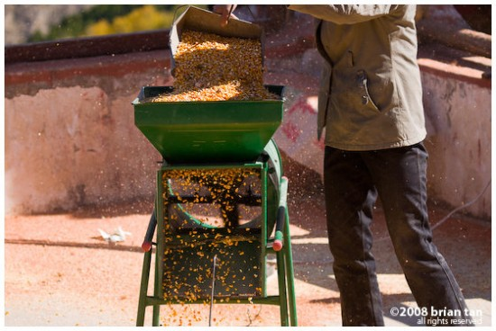 Processing corn, to remove the husks from the good stuff. Strangely this is for feeding the pigs!